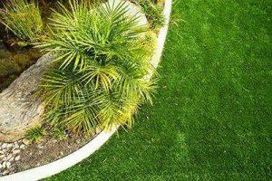 Lawn Pet-Friendly